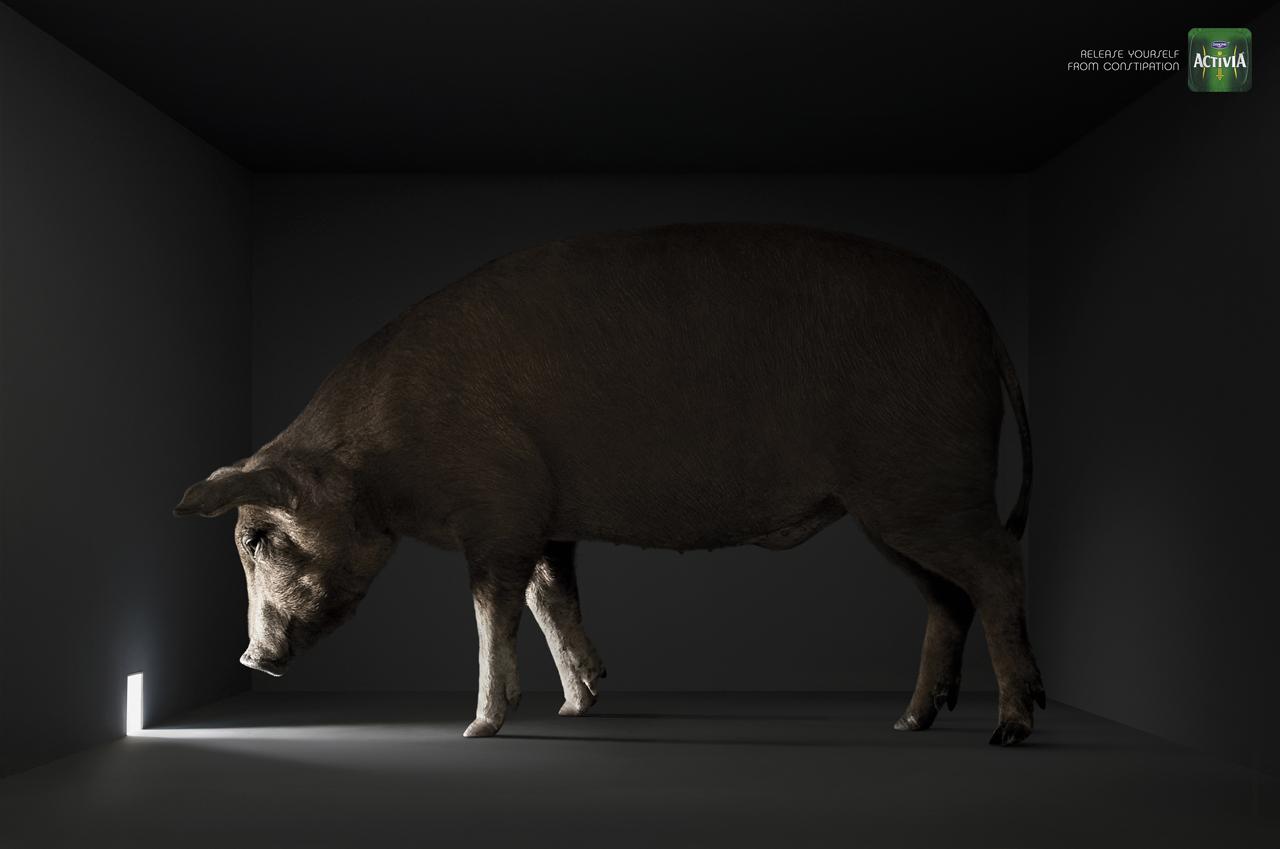 Pub-Activia-cochon