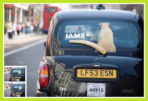 street-marketing-animaux