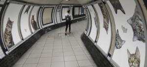 des-chats-remplacent-les-publicites-dans-une-station-de-metro-de-londres-10731577
